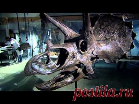 Сражения динозавров 1 серия - YouTube
