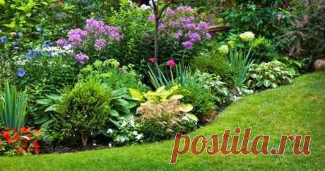 Многолетние цветы, которые не надо выкапывать на зиму Узнайте, какие красивые многолетники хорошо зимуют в средней полосе и не нуждаются в ежегодной выкопке.