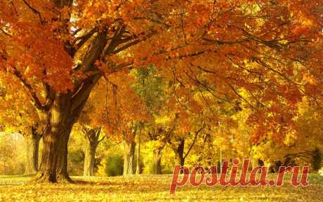 желтоглазая осень