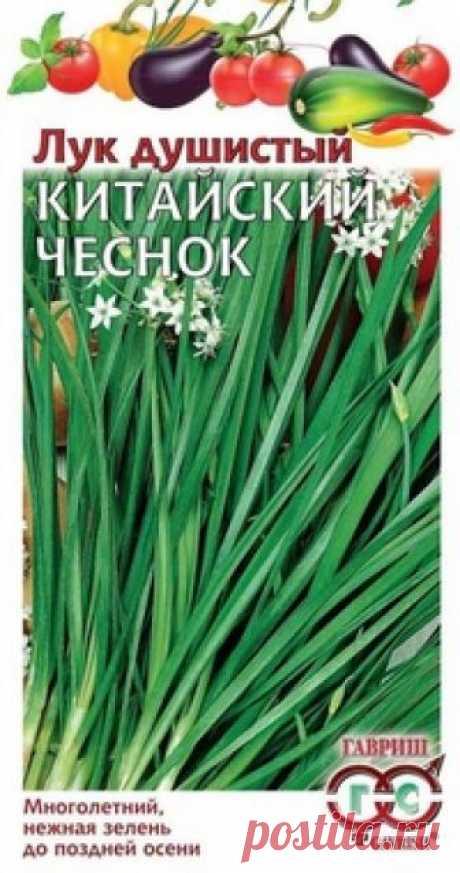 """Семена. Лук Душистый """"Китайский чеснок"""" (вес: 0,3 г) Всхожесть: 85%. Среднеспелый (38 дней от всходов до первой срезки зелени) зимостойкий сорт многолетнего лука. На одном побеге формируется 8-9 зеленых листьев, длиной 30 см и массой 12 г. Зелень слабоострая с приятным чесночным ароматом, используется для приготовления салатов и в качестве..."""