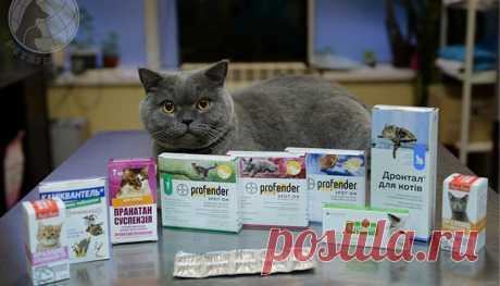 Глисты у кошек: симптомы, профилактика и лечение таблетками и каплями