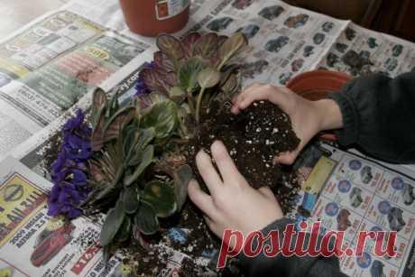 Чтобы цветы хорошо цвели
