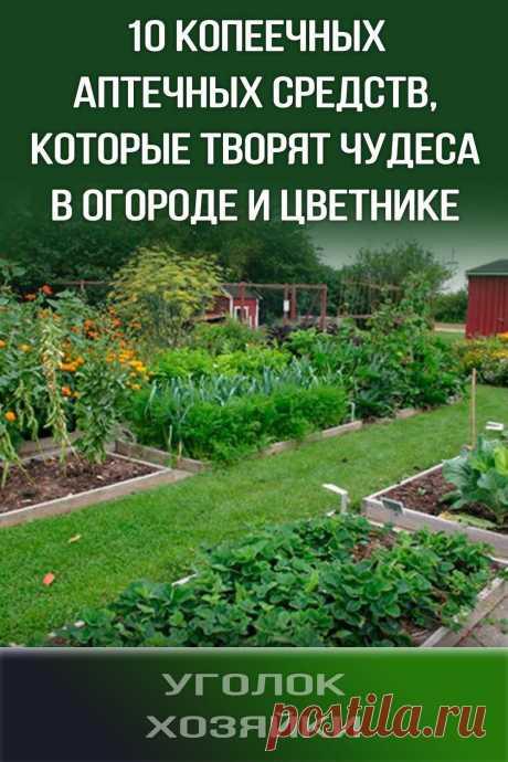Десять копеечных аптечных средств, которые творят чудеса в огороде и цветнике
