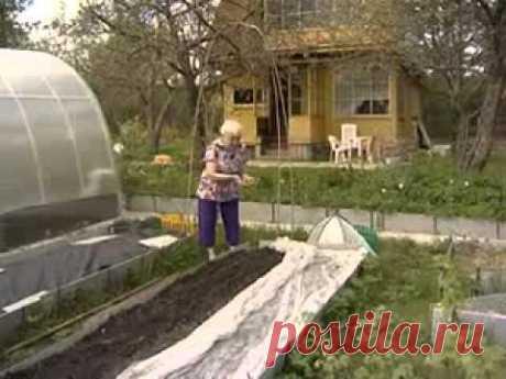 Огород без хлопот. Кизима Галина. Не копать, не поливать!