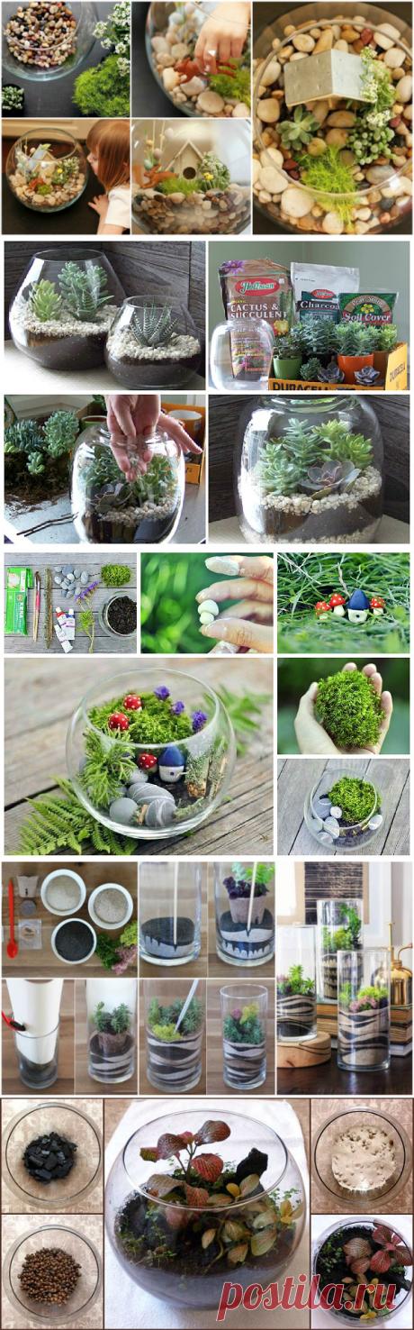Мини сад или флорариум своими руками - чудо в плошке
