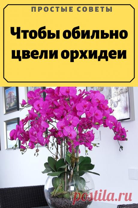 Чтобы обильно цвели орхидеи В позапрошлом сентябре на день рождения сестра подарила мне белый фаленопсис. Я решила не пересаживать его. Поставила в комнате на западное окно с полупрозрачной занавеской, рядом — стаканчик с водой.