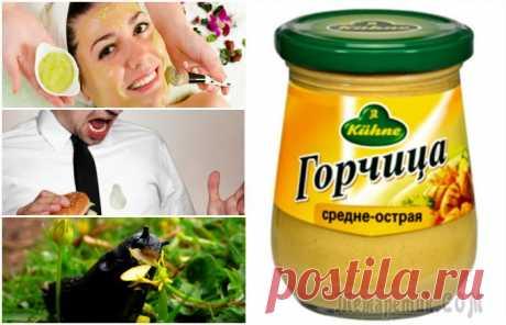 Нестандартные способы полезного применения горчицы в доме