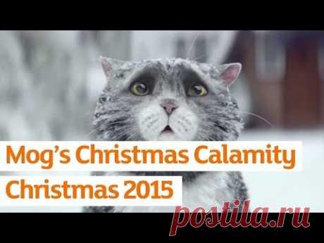 Самый лучший рождественский котЭ / Видеохит - лучшее видео интернета