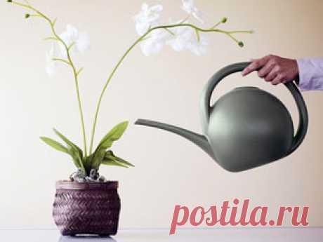 Как поливать орхидею зимой. Уход за цветком