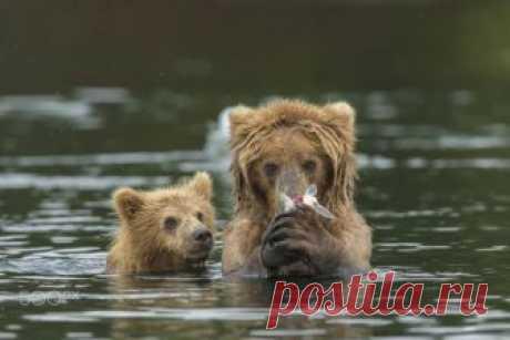 Невероятные фото медвежат и их родителей » Notagram.ru Фотографии маленьких медвежат, которые заставят вас улыбнуться, и узнать, как живется медвежатам и их родителям. Самые смешные и интересные фото медвежат.