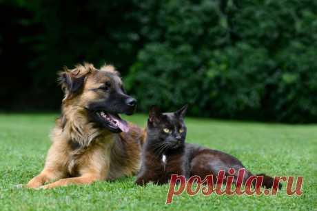 ¿Cómo desacostumbrar al perro reaccionar a las gatas?
