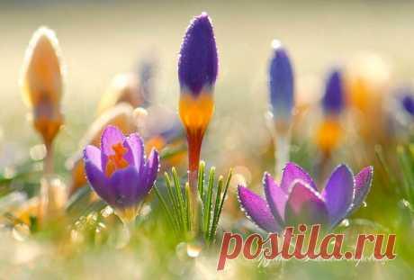 Пусть Лето принесёт тепло солнечных дней, радость счастливых встреч и много солнышка!..