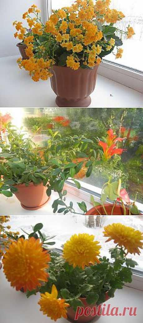 (+1) - Мой маленький сад на подоконнике! | САД НА ПОДОКОННИКЕ