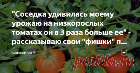 """""""Соседка удивилась моему урожаю на низкорослых томатах он в 3 раза больше ее"""" - рассказываю свои """"фишки"""" по уходу"""