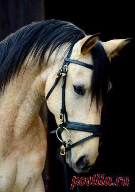 «Першеронская лошадь.» — карточка пользователя Любовь З. в Яндекс.Коллекциях