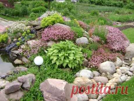 How to make the Alpine hill with own hands: selection of plants and stones