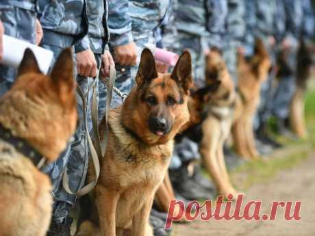 Что делают с умершими служебными собаками? | nashi-pitomcy.ru