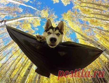 Когда собака с человеком рядом, уходит из души по каплям зло