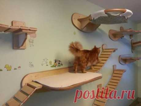 Рай для кошки