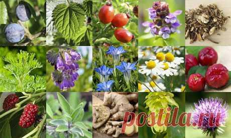 Травы для мужчин: неоценимая польза от природы