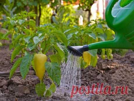 Подкормка перца йодом для урожайности: рецепт, правила и частота применения