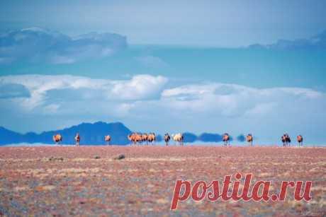 «Миражи превращают монгольские степи в сказочные картины. Над перегретой ровной поверхностью возникают иллюзии воды, перевернутых гор и верблюдов», – рассказывает фотограф Светлана Казина (