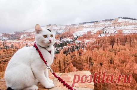 El gato Vladímir veía más de lugares en los EEUU, que muchos americanos