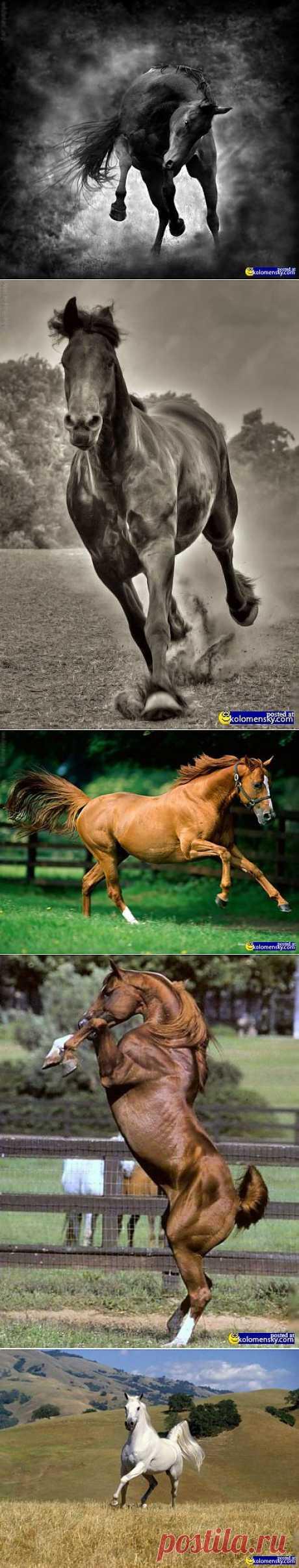 Кони and лошади 100 фото -3 часть » Cайт для друзей: картинки, приколы, фото   kolomensky.com   .