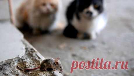 Кошачий паразит может вызывать рак и болезни мозга у человека! / Будьте здоровы