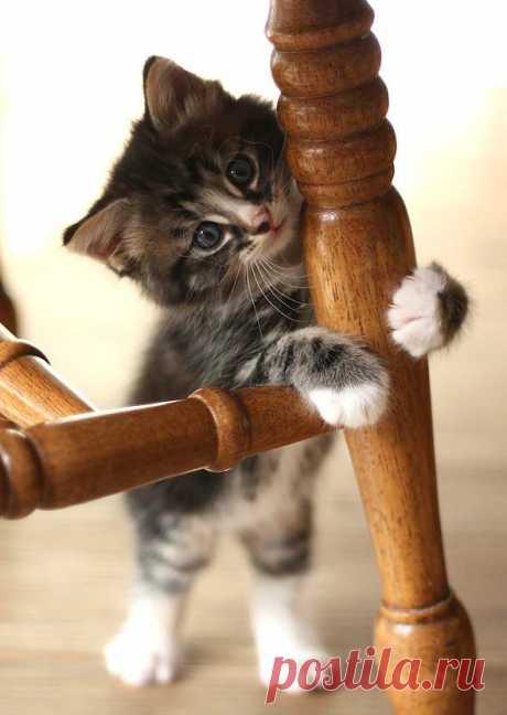 Good Morning Kitten - Frank [redux] - June 16, 2012