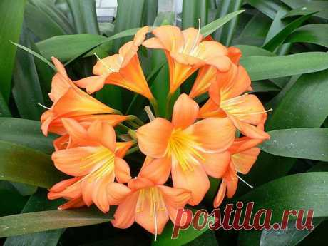 Правила ухода за растениями, цветущими в холода | Изюминки