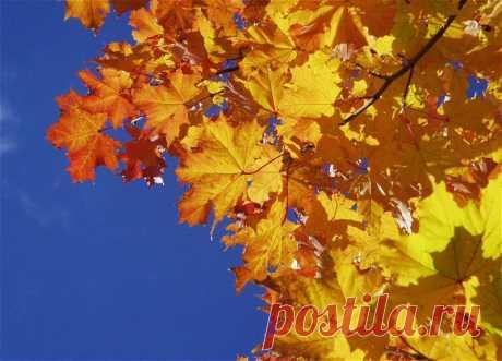 Почему стоит радоваться осени : НОВОСТИ В ФОТОГРАФИЯХ