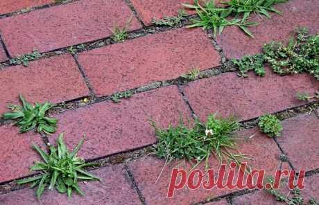 Как избавиться от сорняков между плиткой на даче | Делимся советами
