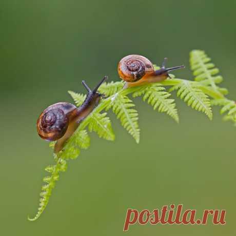 «Пора в путь-дорогу». Автор фото – Елена Соловьёва: nat-geo.ru/photo/user/115825/