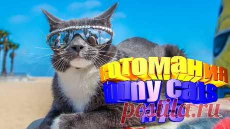 видео смешные коты, смешные видео котов, кот смешной видео, кот смешное видео, видео коты приколы, видео про котов, коты приколы видео, кот видео, видео кота, смешные животные видео, смешные видео животных, животные видео смешное, видео смешное животных, животные смешное, коте видео, прикол котов, приколы котами, коты прикол, кошки видео смешные, смешные кошки видео, смешные про кошек, видео кошек смешные, кошка видео смешное, кошка смешно, про смешно кошек, смешные кошки и, видео про кошек