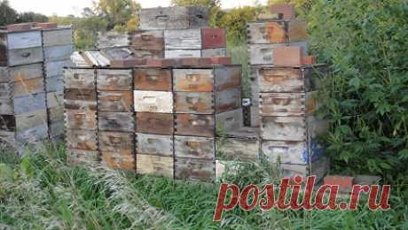 Ленивое пчеловодство | BEEFARM