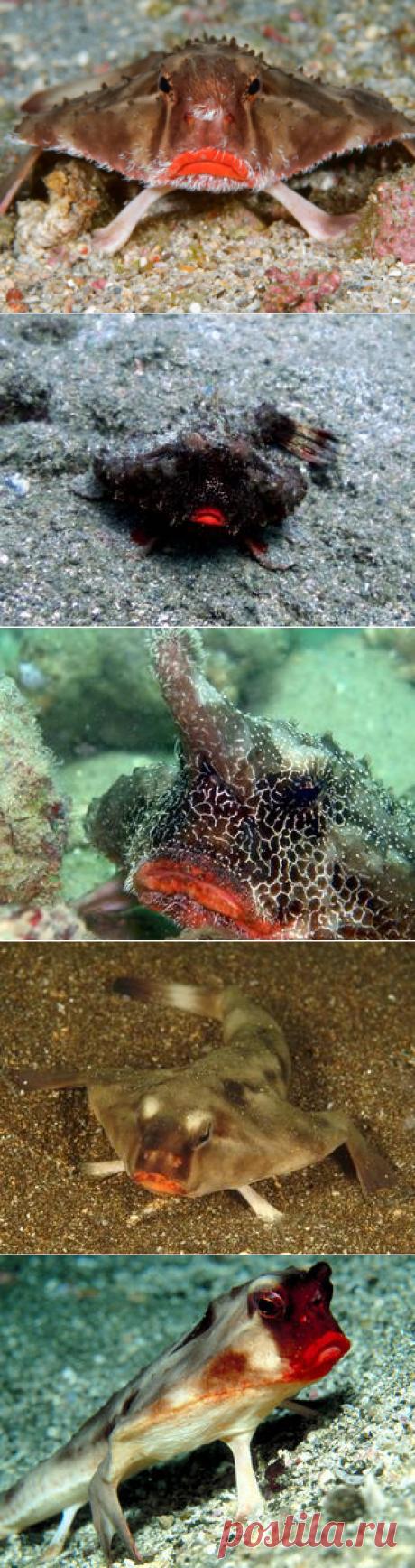 Смотреть изображения морских нетопырей | Зооляндия