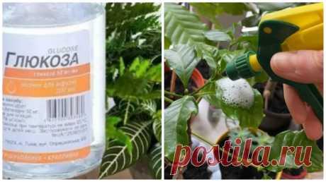 5 лайфхаков по уходу за комнатными растениями, которые вряд ли пришли бы в голову Разведение комнатных растений - очень популярное хобби в наши дни. У опытных заводчиков жилище часто напоминает настоящий ботанический сад. Растения создают положительную ауру. Когда они заболевают...