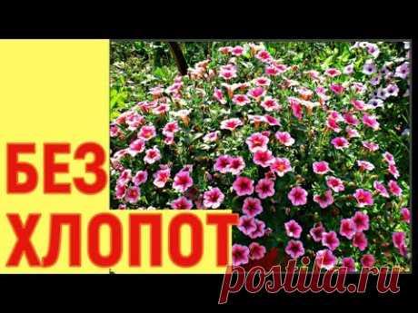 РАССАДА петунии за 35 ДНЕЙ БЕЗ ХЛОПОТ  серии петуний
