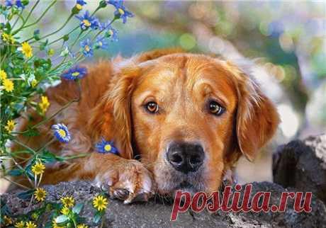Пять очень веских причин завести собаку - Полезное - ГОРНИЦА - дайджест новостей, авторские блоги