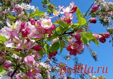 Откройте душу, пусть вбежит весна... - Копилочка: все самое интересное,полезное, красивое!!! - Группы Мой Мир
