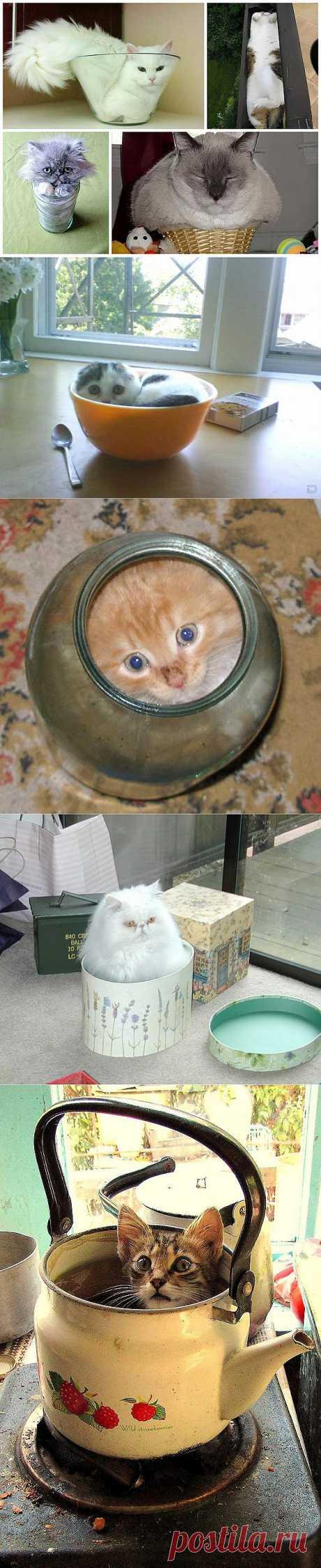 Кошки – это жидкость, есть доказательства : НОВОСТИ В ФОТОГРАФИЯХ