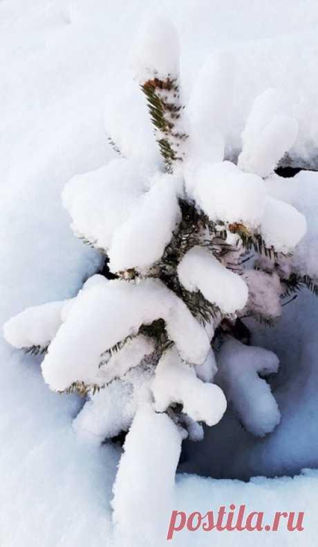 """Десерты для глаз в спокойных тонах На досуге зима сотворила... Взбивая снег в пену, как на волнах, Словно крем по ветвям разложила.  Пусть подача немного скромна, Ведь кому-то хотелось иначе, Но старается очень она Подманить белым цветом удачу.  И попробовав блюда в меню, Все, что сдобрены зимней прохладой, Послевкусие шепчет: """"Ценю! Было вкусно! Другого не надо!""""  Екатерина Венкова"""