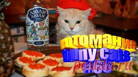 видео смешные коты, коты видео смешное, видео котов смешное, видео коты, видео с котами, для котов видео, видео котов, для кота видео, говорящие коты видео, видео смешные животные, видео смешных животных, смешное животное, смешное видео животных, животные смешное, коты приколы, прикол с котами, приколы о кошках, коты прикол, кошки смешные видео, кошка смешная, видео кошек смешное, видео смешных кошек, кошек смешных, кошка смешно, про смешно кошек, смешные кошек, видео с кошками, видео про кошку