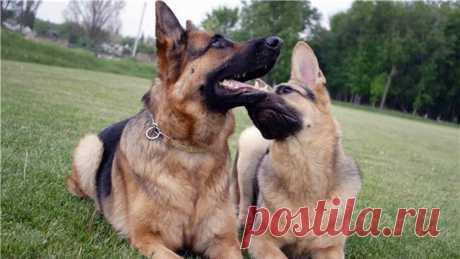 Договор разведения собак