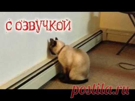 Приколы с котами и смешная ОЗВУЧКА животных – Ржака до слез 2018 от PSO - YouTube