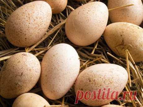 Заговор на куриное яйцо для денег и счастья