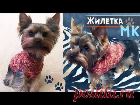 Свитер для собаки спицами 🐶МК   Вязание для собак маленьких пород   Вяжем для йорка жилет