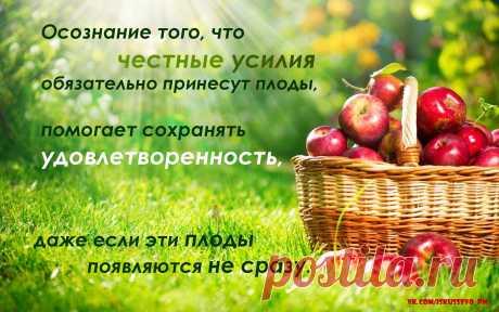 Осознание того, что честные усилия обязательно принесут плоды, помогает сохранить удовлетворённость, даже если эти плоды появляются не сразу.