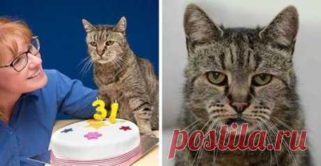 Старейший кот в мире отпраздновал 31-ый день рождения, и у него еще осталось много жизней - Все самое интересное! Кот по кличке Натмег на днях отпраздновал свой 31-ый день рождения, по...